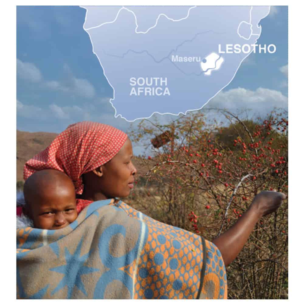 Lesotho rosehip oil